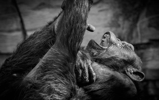 Was macht denn der Schimpanse da :-()