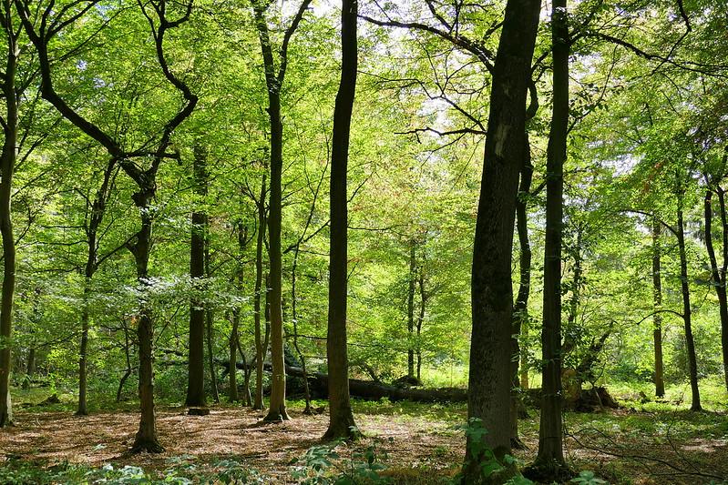 """Foto """"Hambacher Forst"""" von Kimba Reimer unter der Lizenz CC BY 2.0 via Flickr"""