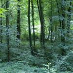 Das Naturschutzgebiet Oefter Tal ist größtenteils bewaldet