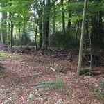 Reisigwall zur Abgrenzung der Altholzinsel im Schellenberger Wald