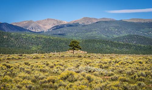 d750 landscape mountain nature newmexico nikon rockymountains sangredecristomountains sky tree
