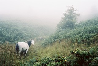 Chevaux sauvages | by Monsieur_Gustave