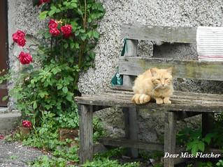 Romeo (13) | by Dear Miss Fletcher