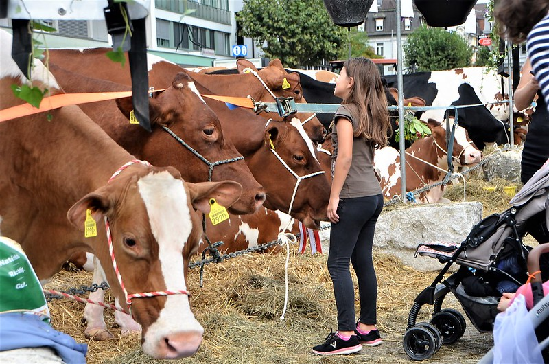 Cheese Days Solothurn 06.09 (13)