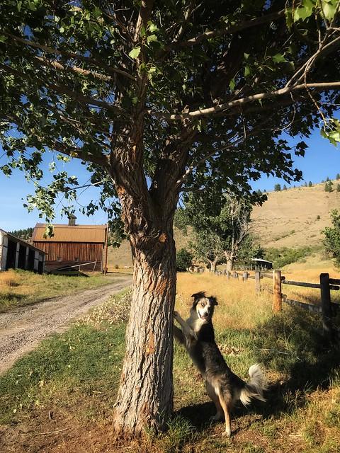Dakota the dog (Explore)