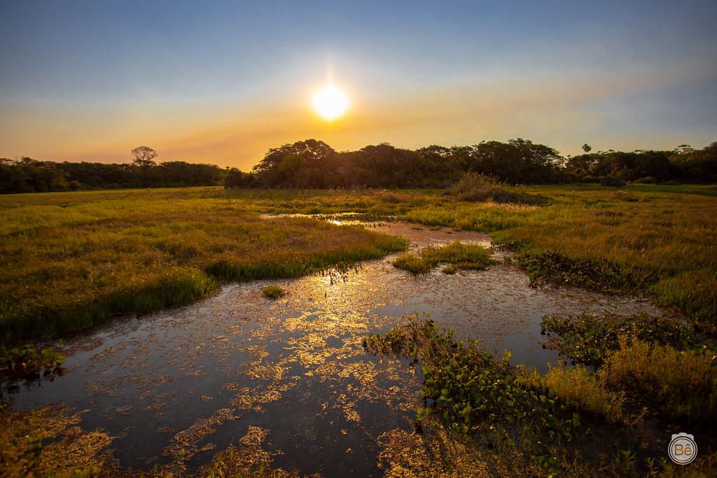 IMG_8068 Pantanal - Brasil