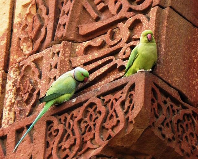 Delhi Qutub Minar complex - two green parrots