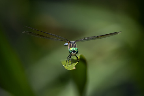 Dragonfly at the pond | by Rob & Amy Lavoie