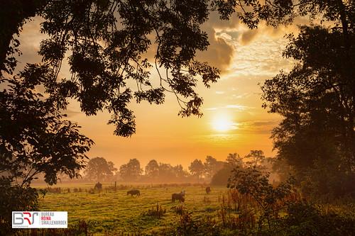 reinasmallenbroek sandebuur onlanden sunrise zonsopkomst netherlands canoneos5dmarkii canonnederland landscape landschap ponys nietap drenthe ponies