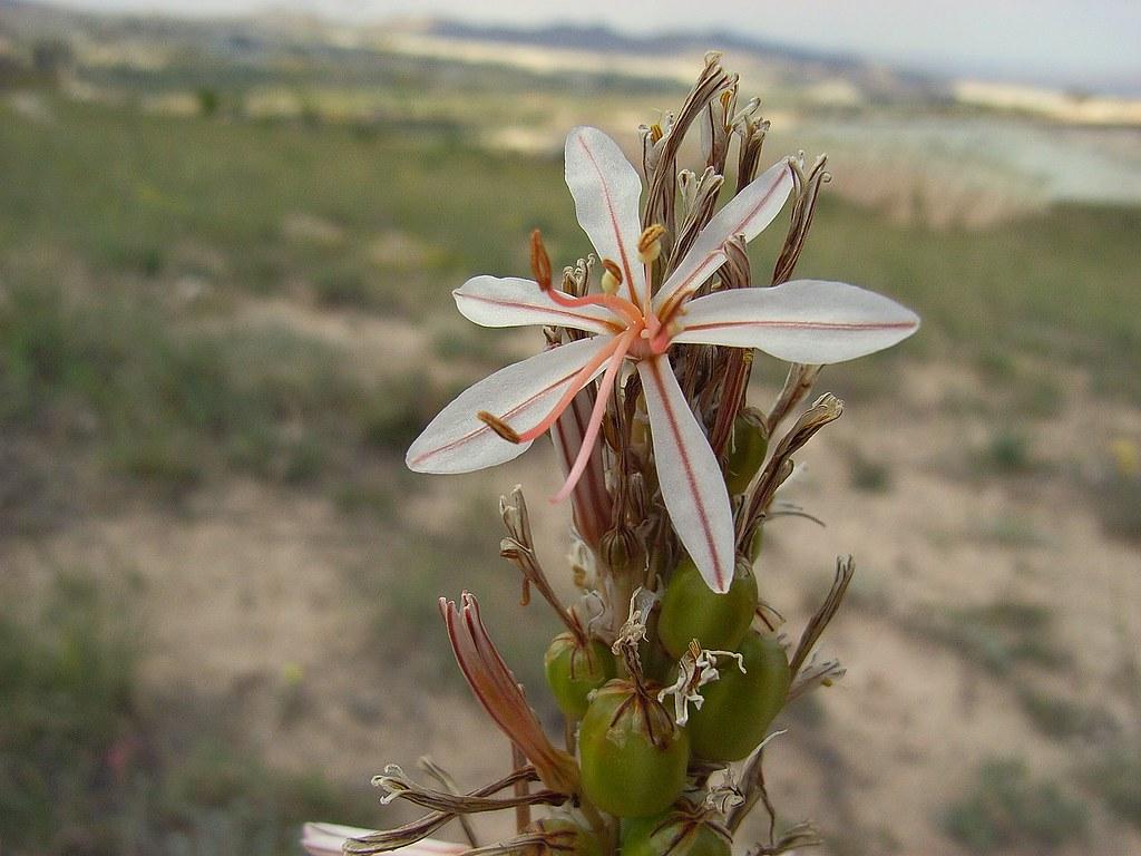 2008-06-17 rosered2 022