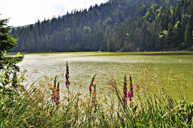 1/2 Le Lac Vert ( Haut Rhin )