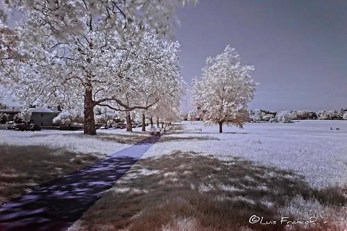 streathamcommoninfraredview infrared infraredview infrarrojo park parque ngw ng ngc ngs ngd ngg london londres