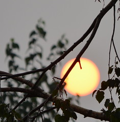 A SUN BEHIND THE SMOKE SCREEN OF MANY FOREST FIRES IN BC.