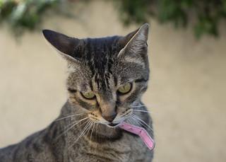 eymet cat