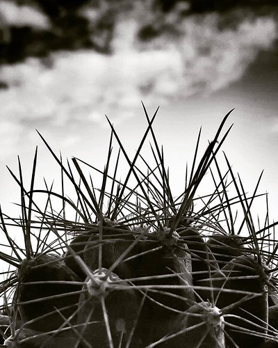 Roses may say 'I love you,' but the cactus says 'F*** off.' #cactus #spike #blackandwhite #bw #sky #clouds #life #black #igers #igersitalia #photooftheday #picoftheday #photography #moodoftheday #plants #love #dark | by Mario De Carli