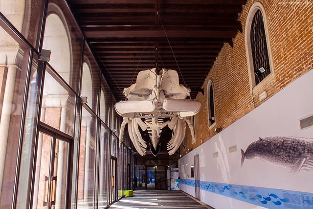 Museo di Storia Naturale, Museum Pass Venezia