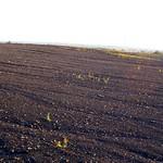 Spuren von Wind und Regen auf der Schurenbachhalde