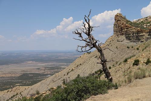 mesaverde mesaverdenationalpark colorado view farview perspective aussicht aussichtspunkt baum tree durango montezumacounty montezumavalleyoverlook montezumavalley