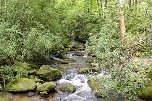 jones gap the south carolina forest woods outdoor landscape water stream middle saluda