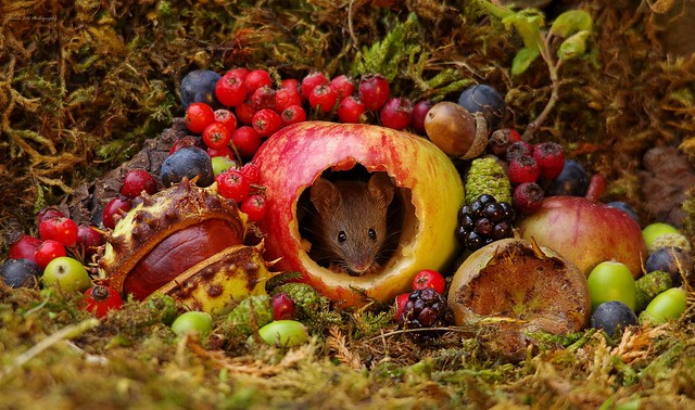 Autumn mouse with fruits and berries (12)
