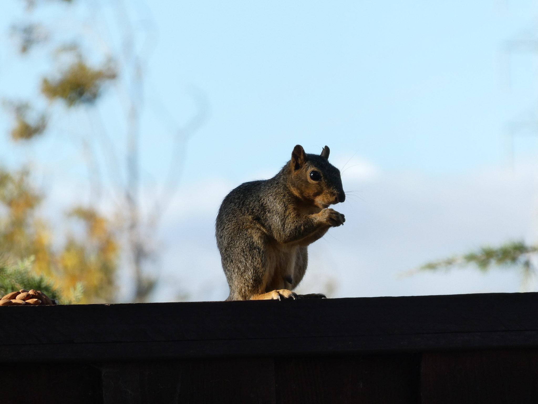 2018-09-15 - Backyard Visitors