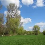 Lichter Auwald am Rheinufer im NSG Flittarder Rheinaue