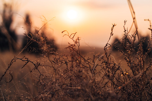 Sunset somewhere in South Africa | by Ryan Jarrett 4130
