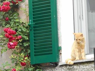Romeo (2) | by Dear Miss Fletcher