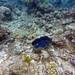 2018-06-24 Great Barrier Reef