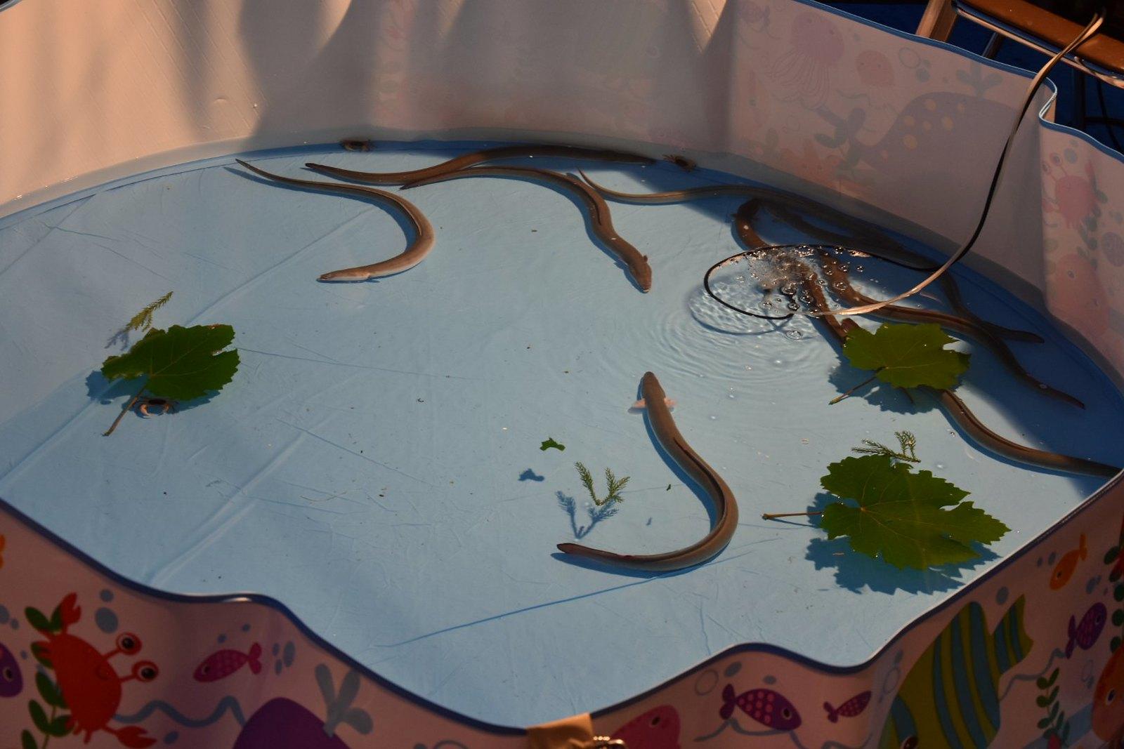Takayama - Bon odori - jeu de la pêche à l'anguille