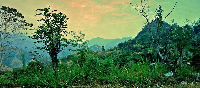INDONESIEN; SULAWESI, von Makassar nach Tanah Toraja, Regenwald , 17569/10574