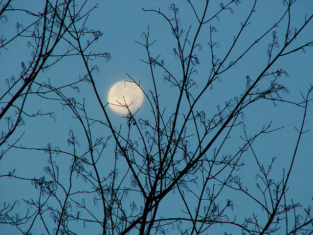 Lonely Moon