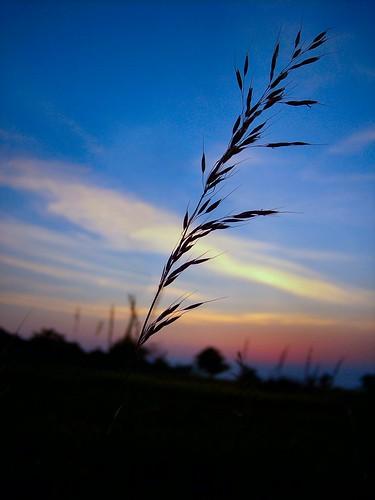 sunset macro nature silhouette closeup nationalpark grasses shenandoah naturescenes shenandoahnationalpark greatsky kodakz760 calendarshot drewmyers easternnorthamericanature abigfave drewmyersphotonet