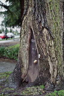 Door knob tree at the corner of Nelson and Jarvis Streets | by Georgie_grrl