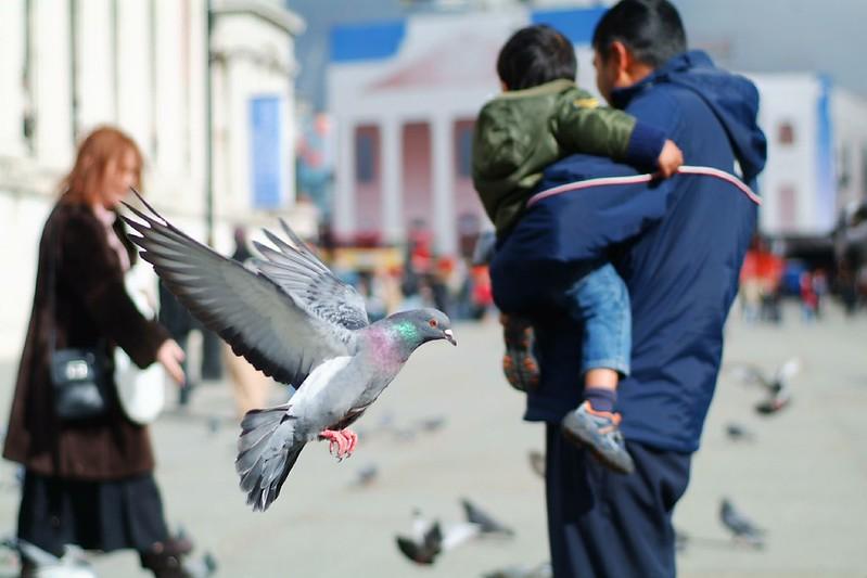 Pigeons @ Trafalgar Square