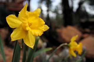 Signs of Spring   by cogdogblog