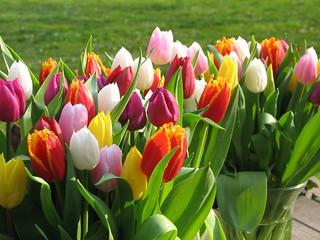 Tulipfest