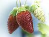 Erdbeeren im Doppelpack by heimibe