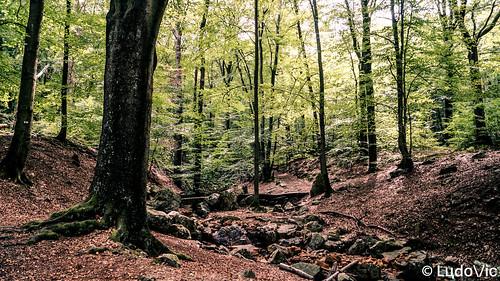 Source de la Géronster, Spa (02)