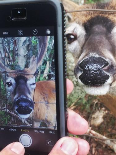 mammal animal meta smartphone iphone deer tworiverswildlifepark tworivers sydney novascotia capebreton