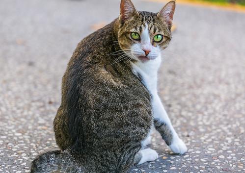 Cat | by trebandicoot (Lynn)