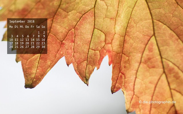 092018-weinblatt-wallpaperliebe-diephotographin
