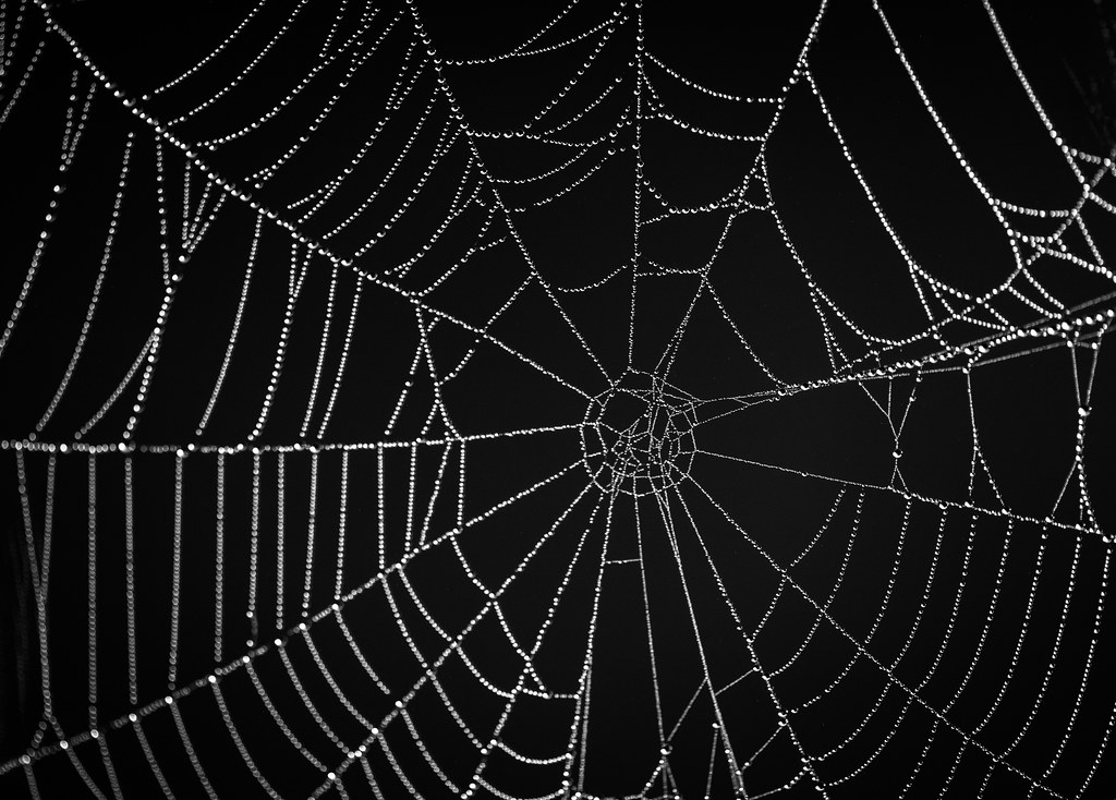 Spiders web | Ben Andrew | Flickr
