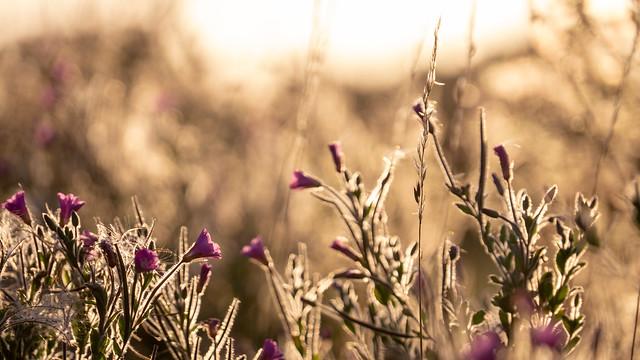 Sunset field.