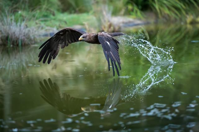 Hawk Conservancy Trust 120918_57.jpg
