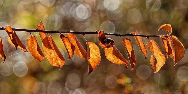 First autumn signs - Premiers signes d'automne
