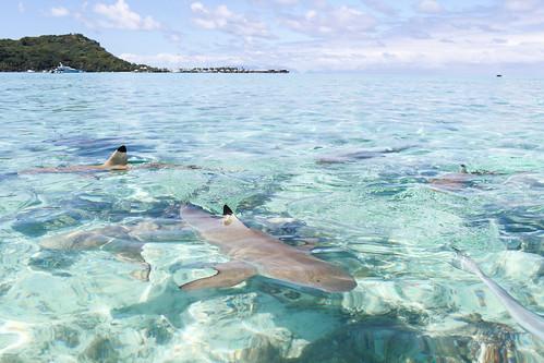 Bora Bora, French Polynesia | by Farfelue