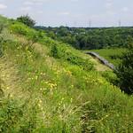 Der nach Südosten weisende Hang der Halde Rheinelbe wird sehr warm und beherbergt zahlreiche Pflanzen sowie Insekten