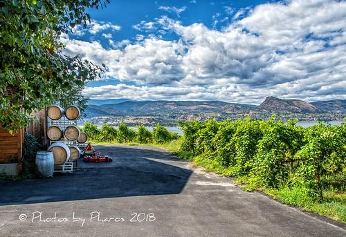 canada britishcolumbia okanagan naramata marichelwinery grapes vineyard wine cellar barrels
