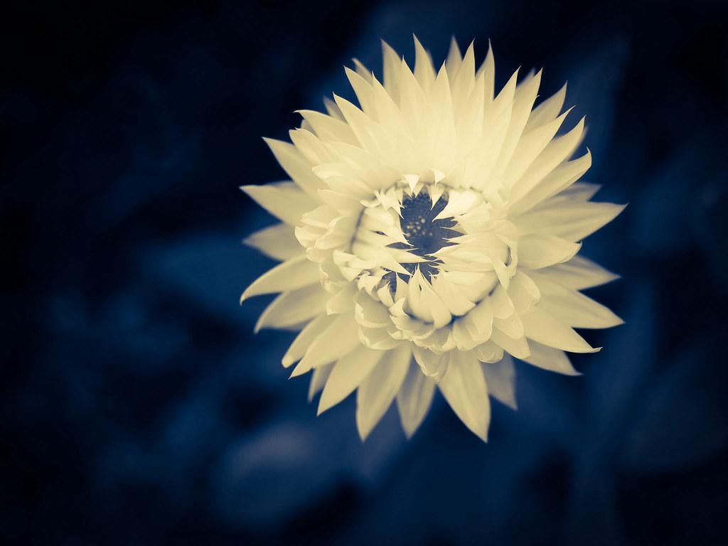 Unfolding petals